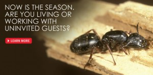 Envirocare Gets Rid of the Ants in Your Home.