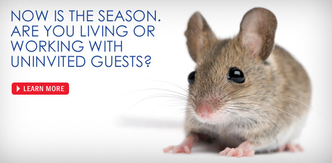 Envirocare Pest Control of CT gets rid of mice in your home!