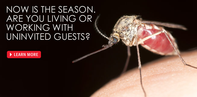 Envirocare Pest Control of CT offers mosquito and tick yard treatments for a pest free lawn.